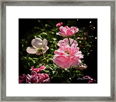 Framed Print featuring the photograph Pink Passion  by Joann Copeland-Paul