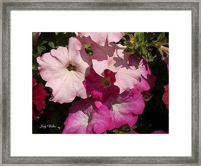 Pink Pastels Framed Print by Judy  Waller