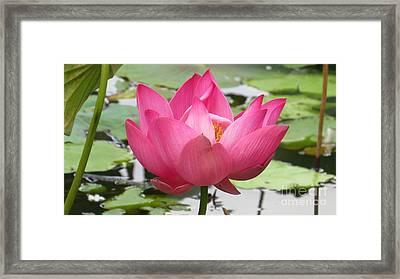 Pink Peace Framed Print by Evie Hanlon