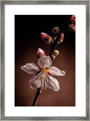 Pink Peach Blooms 5510.02 Framed Print by M K  Miller