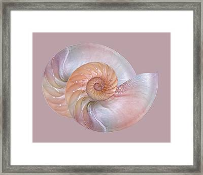 Pink Pearlescent Nautilus Shells Framed Print