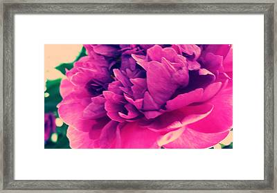 Framed Print featuring the photograph Pink Peonie by Paul Cutright