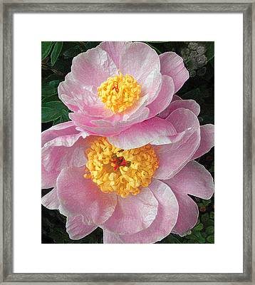 Framed Print featuring the photograph Pink Peonies by David Klaboe