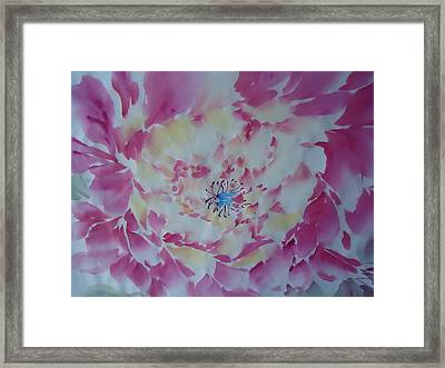 Pink Peony 002 Framed Print by Dongling Sun