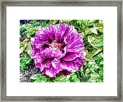 Pink Peony 2 Framed Print by Lanjee Chee