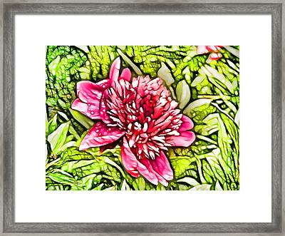 Pink Peony  3 Framed Print by Lanjee Chee