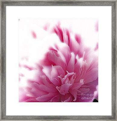 Pink Peony Framed Print by Addie Hocynec