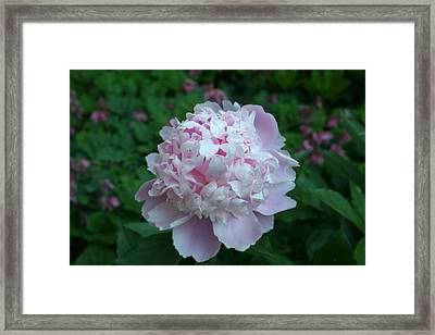Framed Print featuring the digital art Pink Peony by Barbara S Nickerson