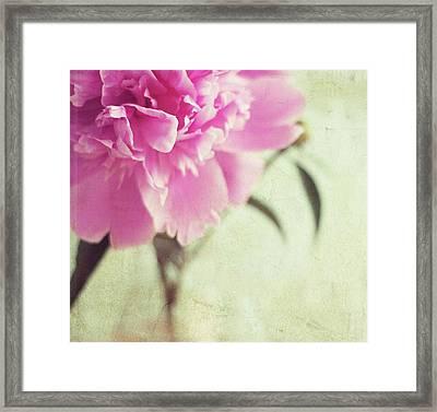 Pink Peony Flower Framed Print by By Julie Mcinnes