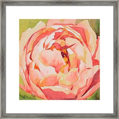 Pink Peony Glow  Framed Print by Jo  Mackenzie