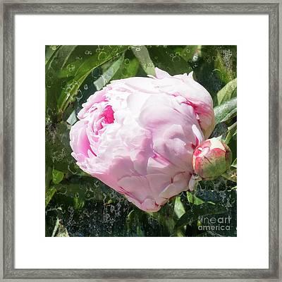 Pink Peony IIl Framed Print