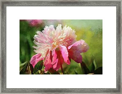 Pink Peony Spring Splash Framed Print by Theresa Campbell