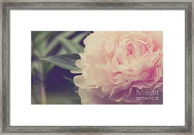 Pink Peony Vintage Style Framed Print