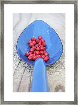 Pink Pepper In Blue Spoon Framed Print by Frank Tschakert