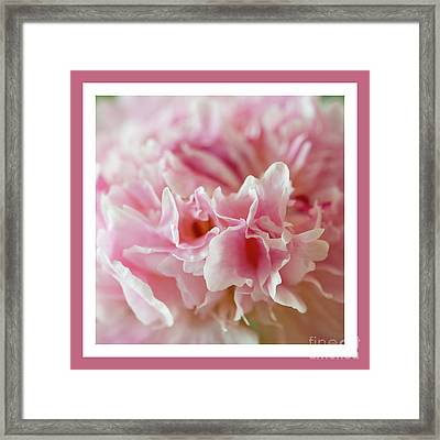 Framed Print featuring the photograph Pink Perfection by Wendy Wilton