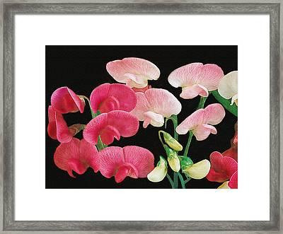 Pink Petals Framed Print by Dennis Buckman