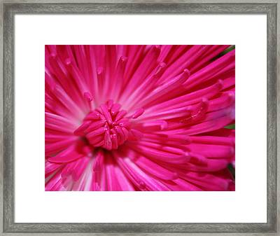 Pink Petals Framed Print by Inspired Arts