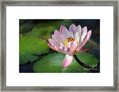 Pink Petals Framed Print by Liesl Walsh