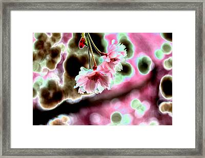 Pink Framed Print by Peter  McIntosh