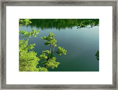 Pink Pine Framed Print
