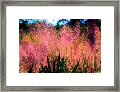 Pink Plumage Framed Print by Lisa Wooten