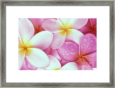 Pink Plumeria Framed Print by Carl Shaneff - Printscapes