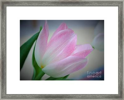 Pink Poetry Framed Print