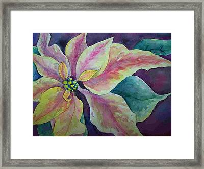 Pink Poinsettia Framed Print by Sandy Collier