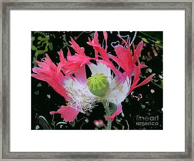 Pink Poppy Framed Print by Addie Hocynec