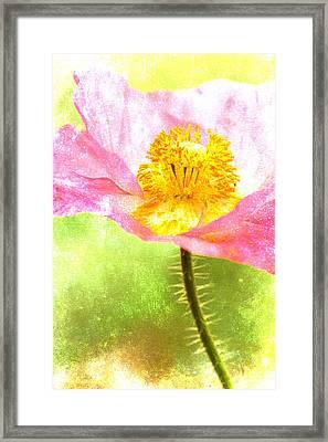Pink Poppy On Green Framed Print by Carol Leigh