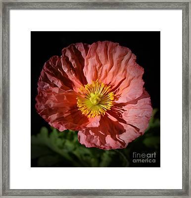 Pink Poppy Portrait Framed Print