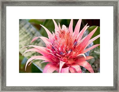 Pink Protea Art Framed Print