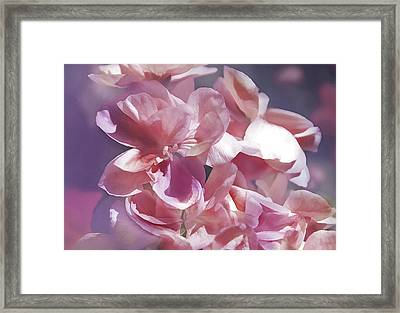 Framed Print featuring the photograph Pink Punch by Elaine Manley