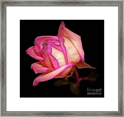 Pink Pursuit Framed Print