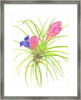 Pink Quill Framed Print by Penrith Goff