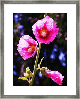 Pink Red Flower Framed Print by Eric  Schiabor