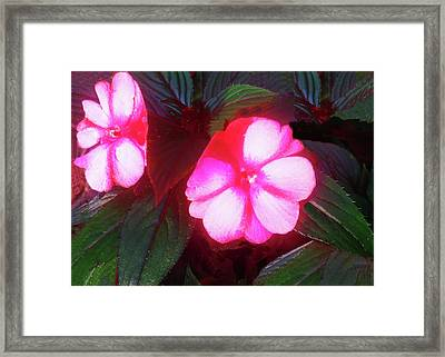 Pink Red Glow Framed Print