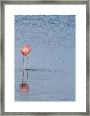 Pink Reflections Framed Print by Arry Murphey