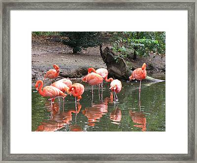 Pink Reflections Framed Print by Gloria Byler