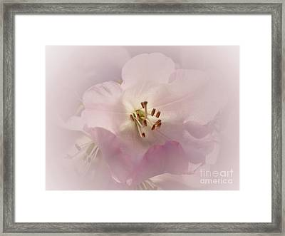 Pink Rhododendron 3 Framed Print