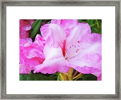 Pink Rhododendron Art Print Floral Canvas Rhodies Baslee Troutman Framed Print