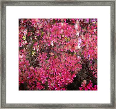 Pink Rhododendron Framed Print by Thom Zehrfeld