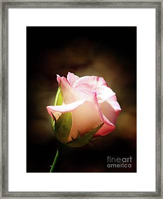 Pink Rose 2 Framed Print by Inspirational Photo Creations Audrey Woods