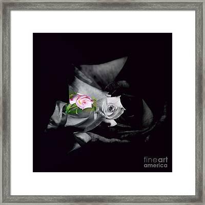 Pink Rose 2 Shades Of Grey Framed Print