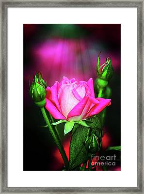 Pink Rose Framed Print by Inspirational Photo Creations Audrey Woods