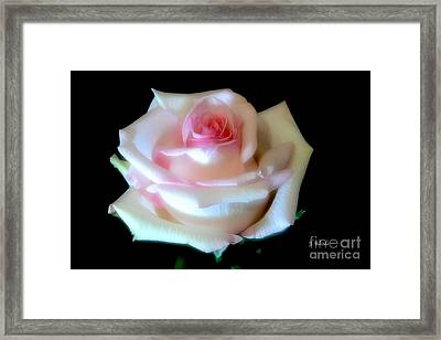 Pink Rose Bud Framed Print by Jeannie Rhode