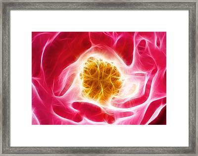 Pink Rose Fractal Framed Print