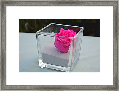Pink Rose In Venice Framed Print