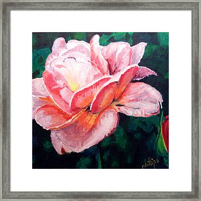 Framed Print featuring the painting Pink Rose by Jim Phillips