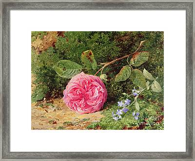Pink Rose On A Mossy Bank Framed Print by Henry Sutton Palmer